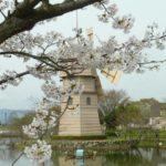 新旭 風車村と桜