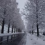 冬のメタセコイヤ並木